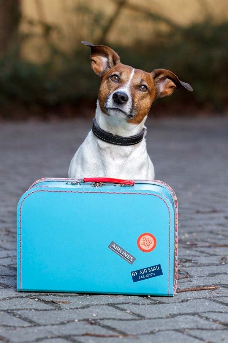 hotel pet friendly a rivoli vicino torino